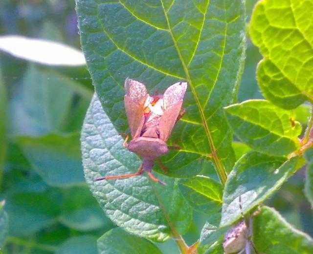Fauna y flora - Paginas amarillas albacete ...