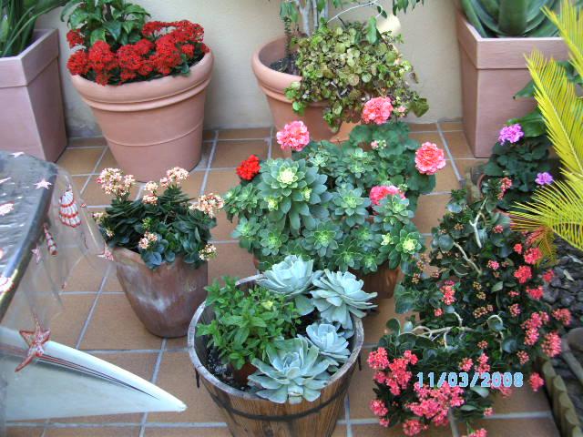 Invierno en alicante las plantas lo demuestran for Plantas para invierno