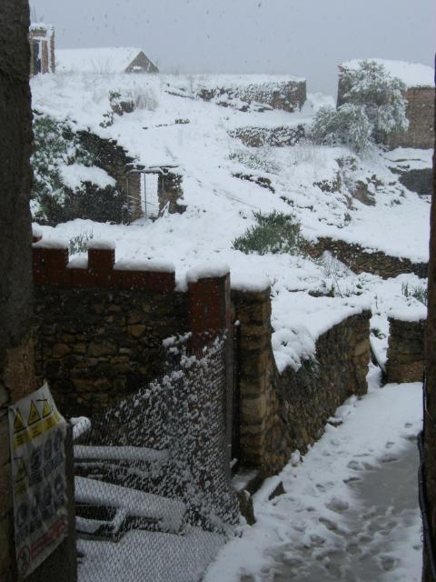 Cerollera nevada 08