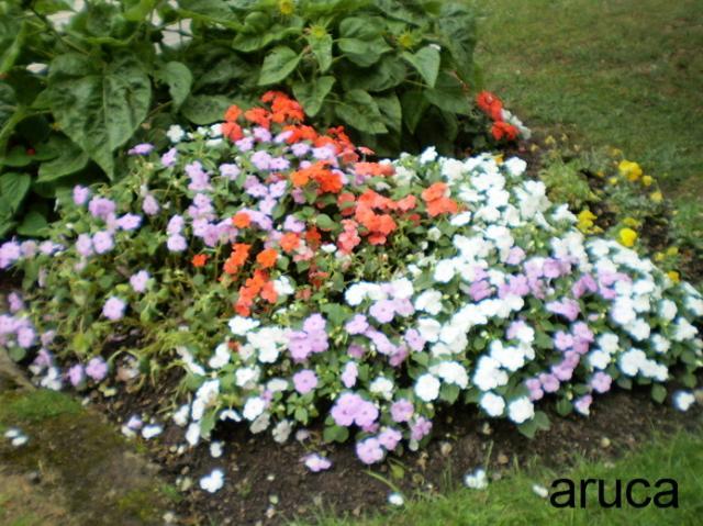 flores-