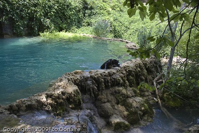 fotos de orbaneja del castillo perro banandose