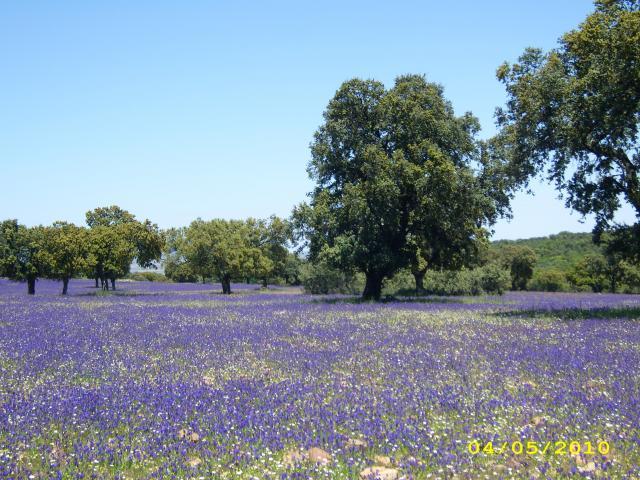 Montes de toledo en primavera - Foro de sonseca ...