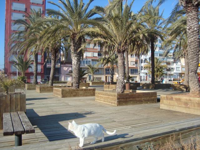 Palmeral playa torrenostra playa sur de torreblanca - El tiempo torreblanca castellon ...