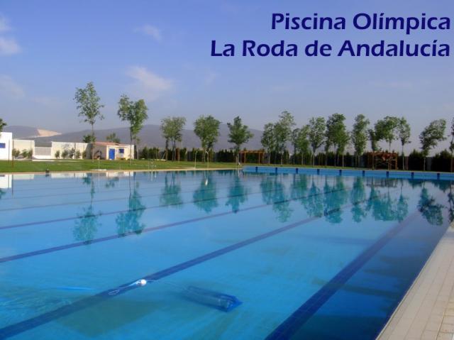 Piscina olimpica for Fotos follando en la piscina