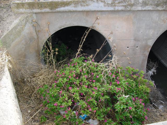 Nuevas zonas verdes en el alcantarillado la gineta - El tiempo en la gineta albacete ...