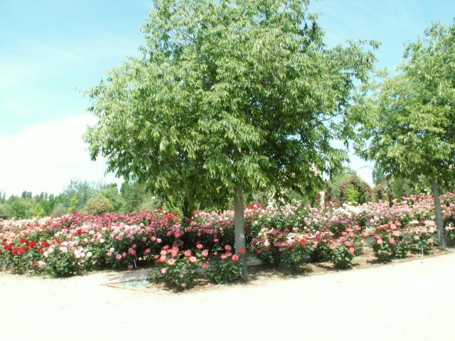 Jardin botanico de alcala alcal de henares for Cementerio jardin alcala de henares